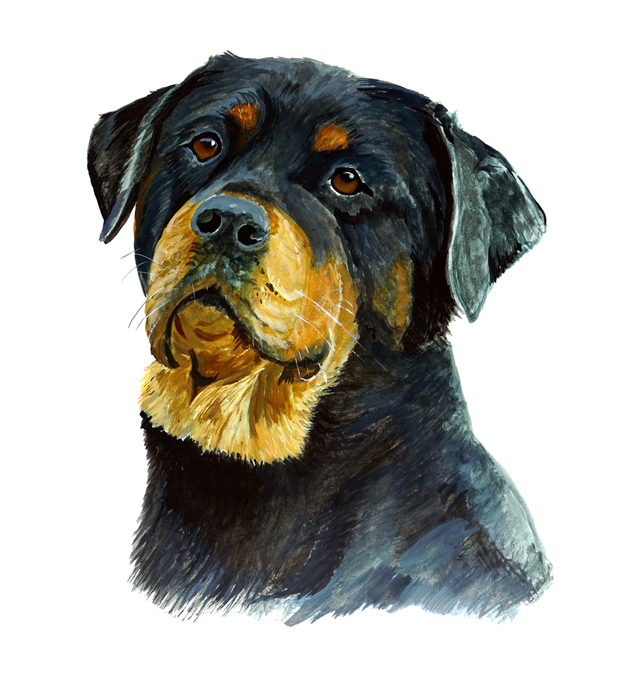 Image is loading rottweiler dog auto boat rv truck car camp