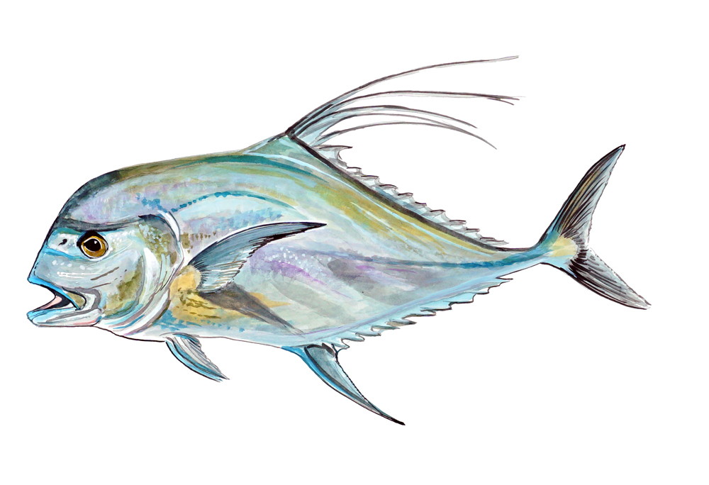 Image Is Loading African Pompano Pennant Fish Fishing Home Office Room