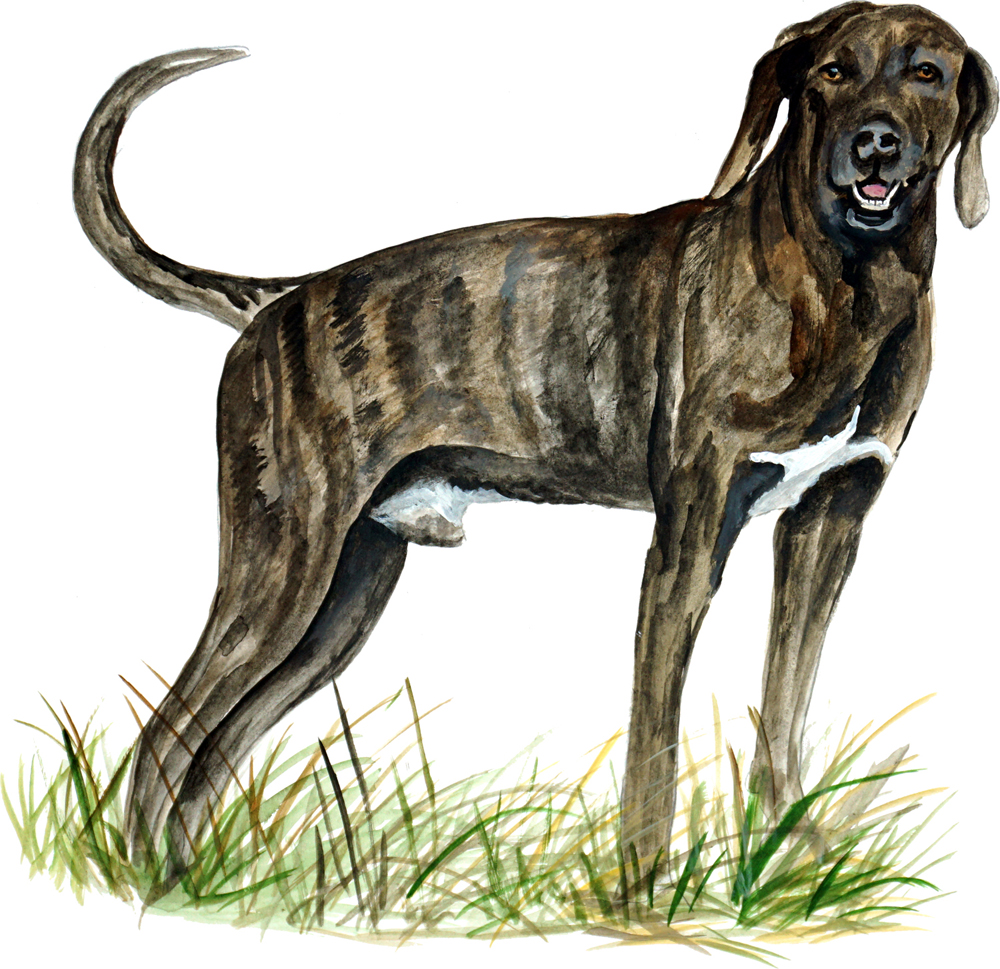 Details about PLOTT BROWN BRINDLE SCENT HUNTING NORTH CAROLINA STATE DOG  HOUND STICKER DECAL