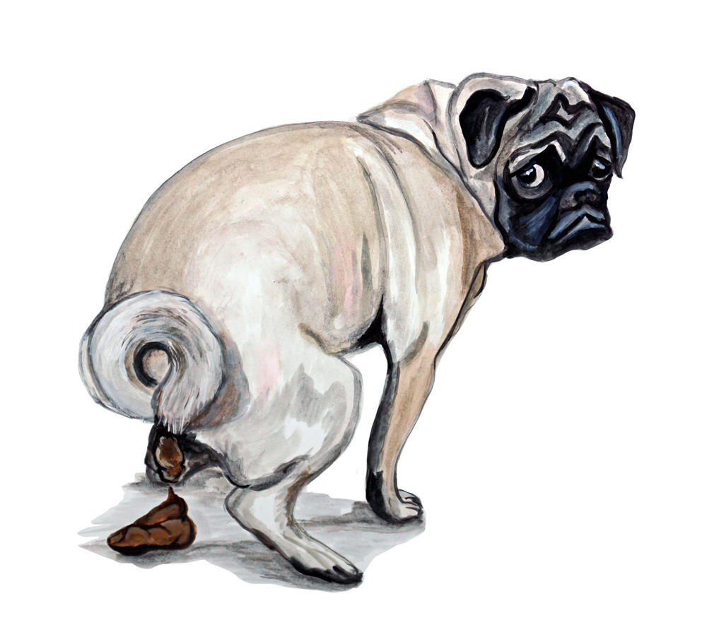 pug pooping pug wrinkle dog poop crap vinyl decal sticker funny 2317