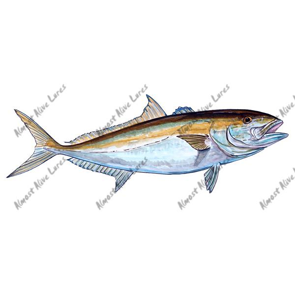 Amberjack - Printed Vinyl Decal