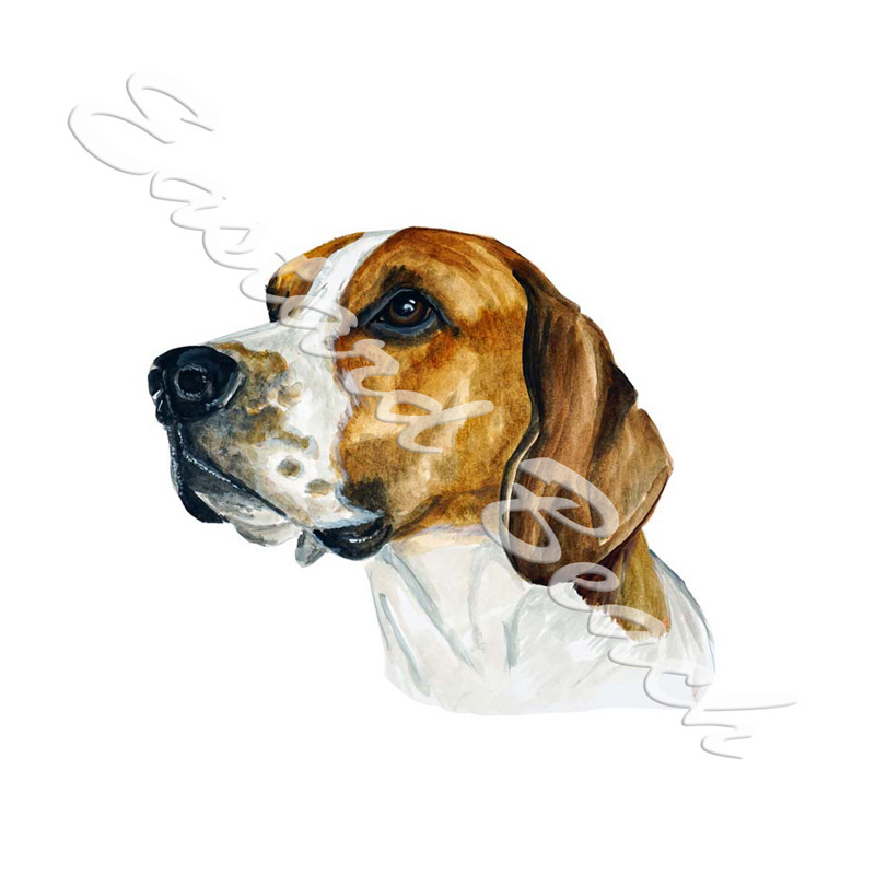 American Foxhound - Printed Vinyl Decal