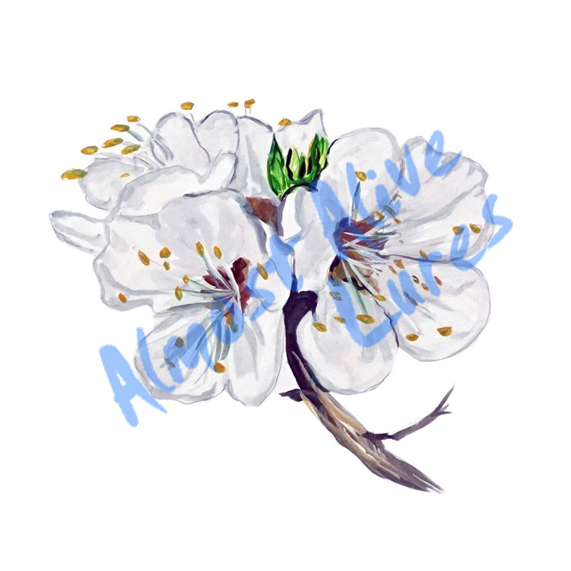 Apricot Blossom - Printed Vinyl Decal