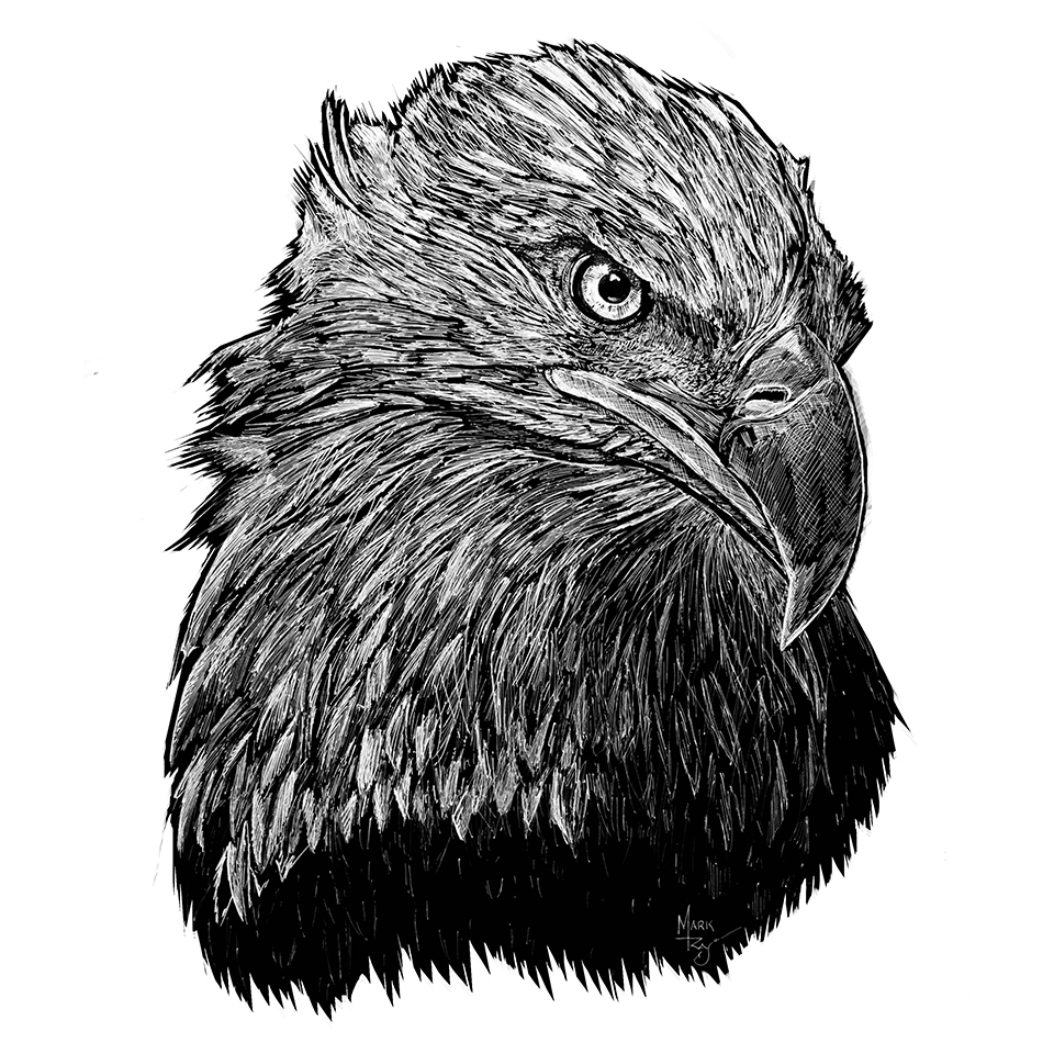Bald Eagle - Pen & Ink