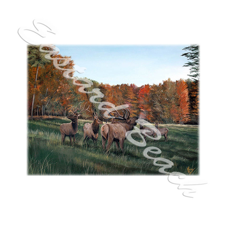 Bulls Of Belle Hollow - Printed Vinyl Decal