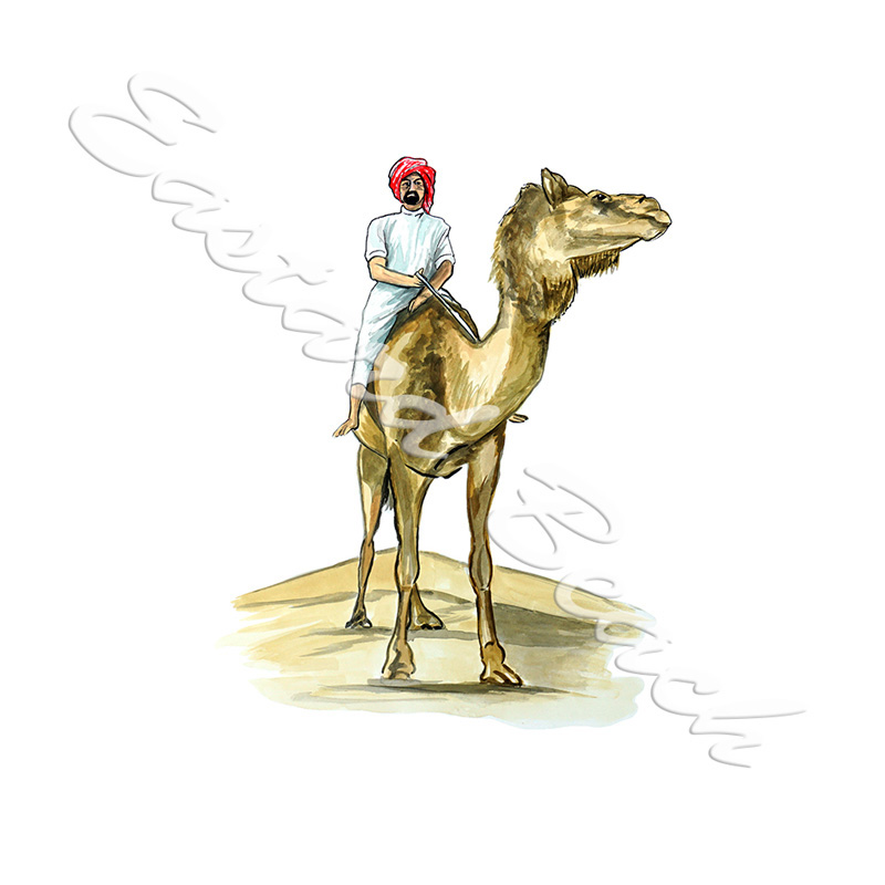 Camel & Rider - Printed Vinyl Decal