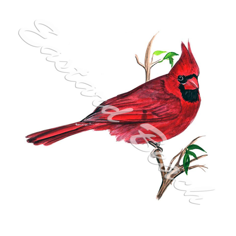 Cardinal - Printed Vinyl Decal