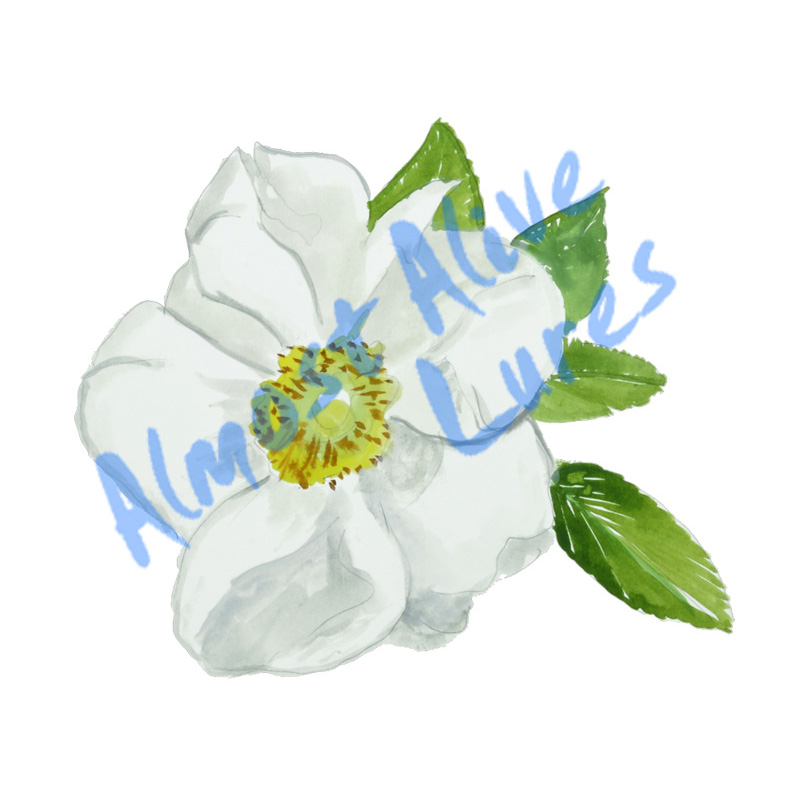 Cherokee Rose - Printed Vinyl Decal