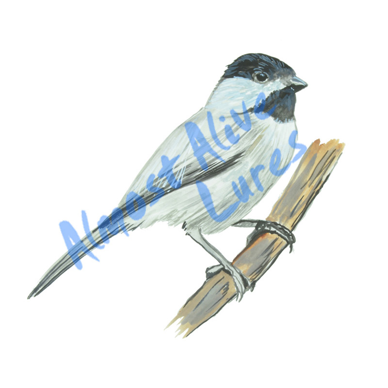 Chickadee - Printed Vinyl Decal