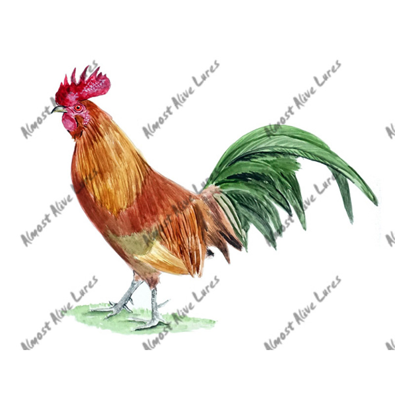 Chicken Rooster - Printed Vinyl Decal