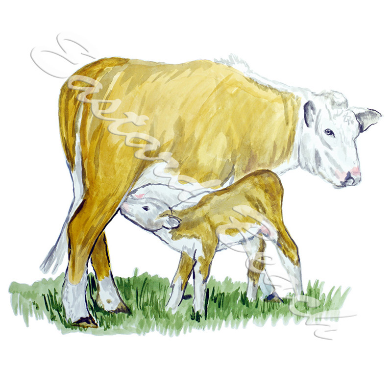 Cow & Calf - Printed Vinyl Decal