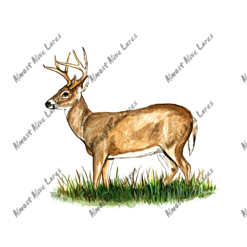 Deer Buck - Printed Vinyl Decal