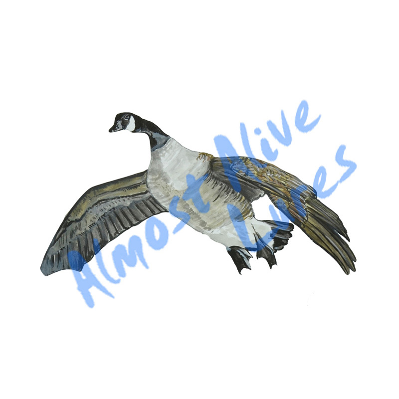 Flying Goose - Printed Vinyl Decal