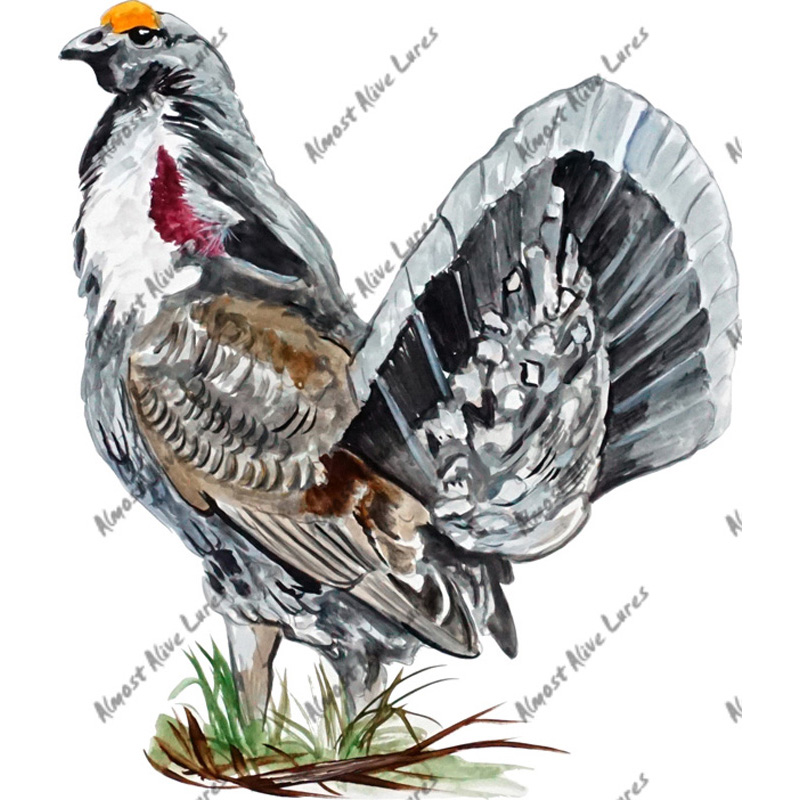 Dusky Grouse - Printed Vinyl Decal