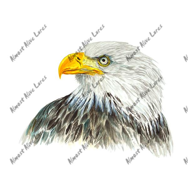American Bald Headed Eagle - Printed Vinyl Decal