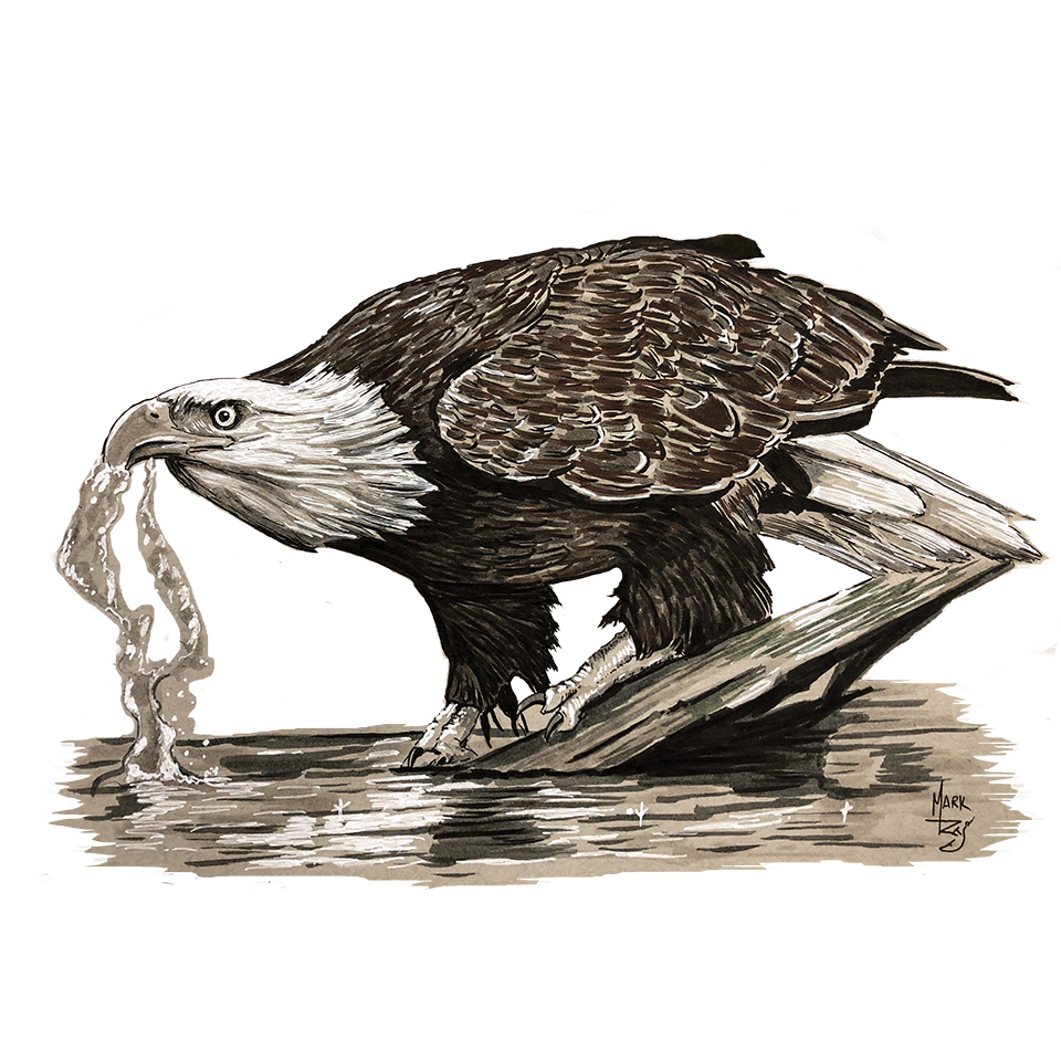 Eagle Drinking Water