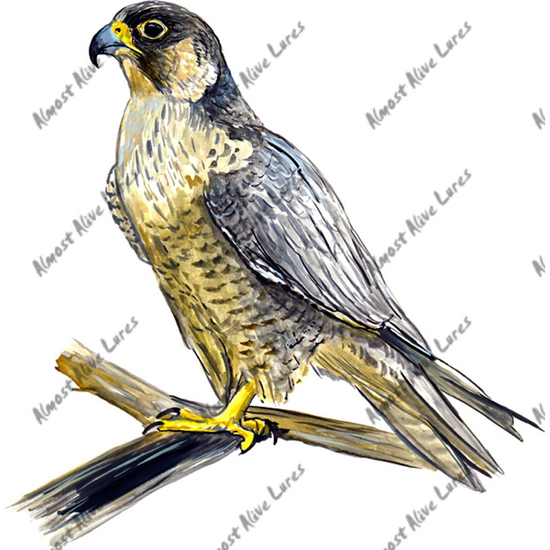 Falcon - Printed Vinyl Decal