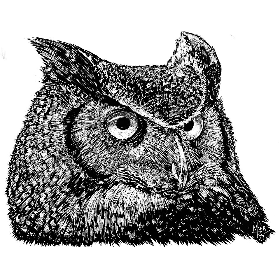 Great Horned Owl - Pen & Ink