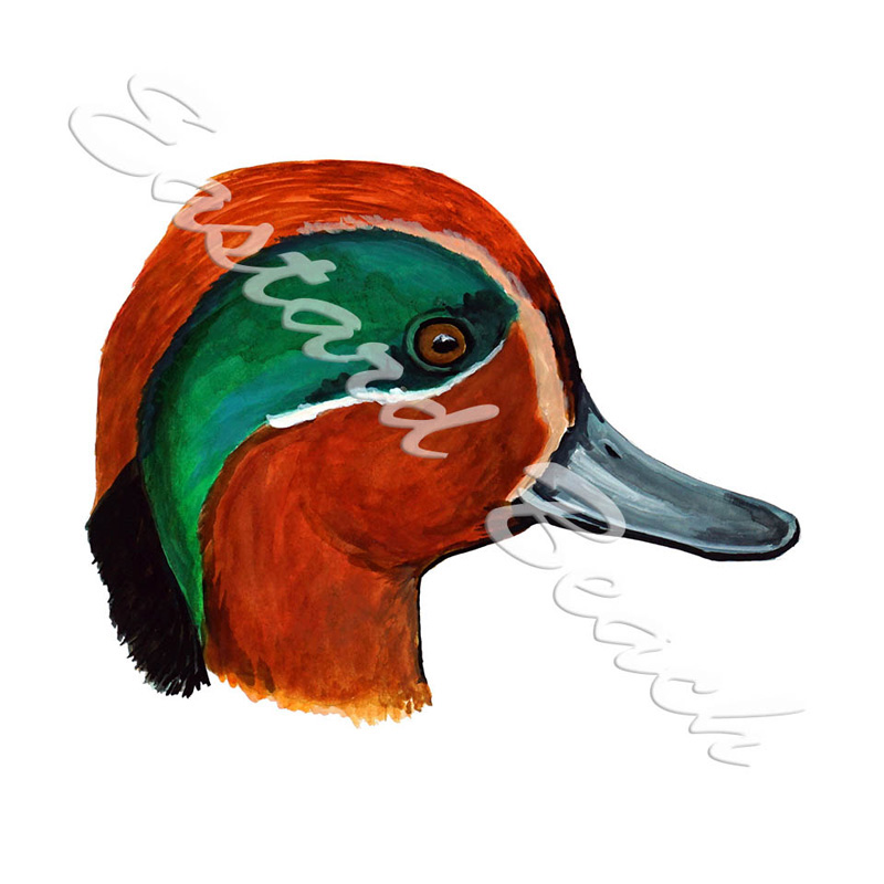 Green Winged Teal Duck Head - Printed Vinyl Decal