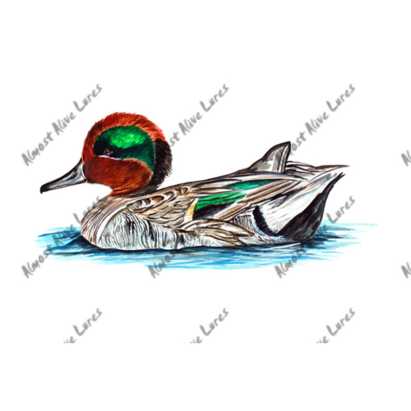Green Winged Teal Duck - Printed Vinyl Decal