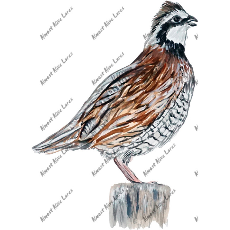 Northern Bobwhite Quail - Printed Vinyl Decal