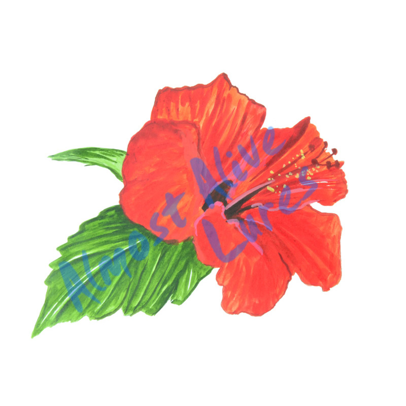 Hibiscus Flower - Printed Vinyl Decal