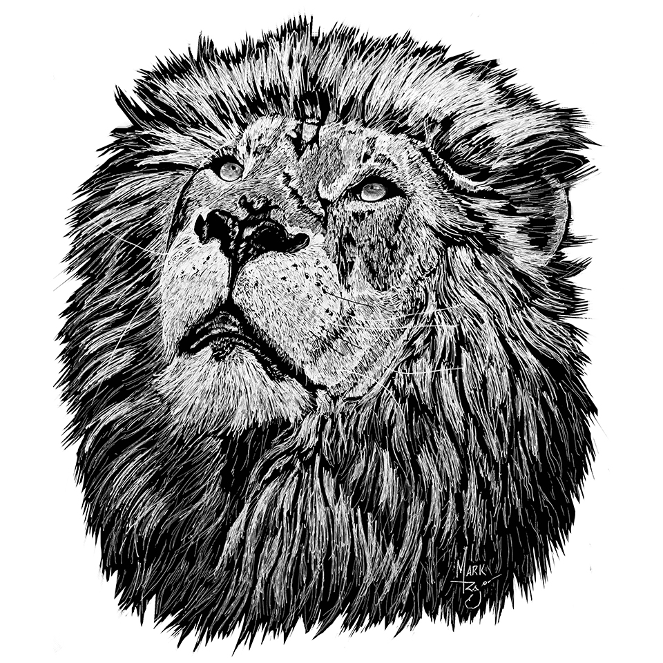 Lion - Pen & Ink