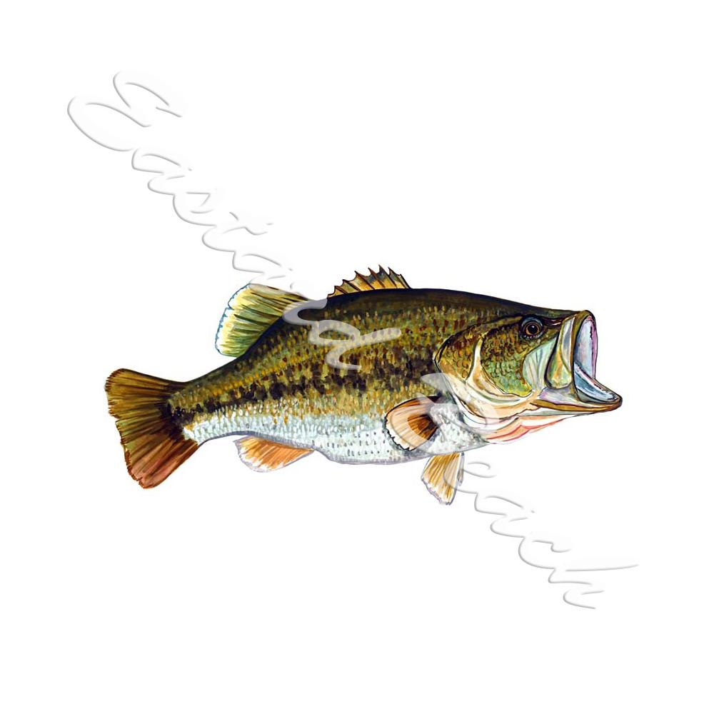 Large Mouth Bass - Printed Vinyl Decal
