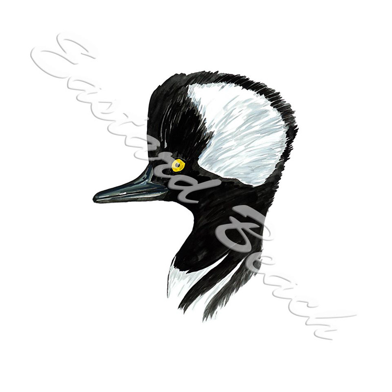 Merganser Head - Printed Vinyl Decal
