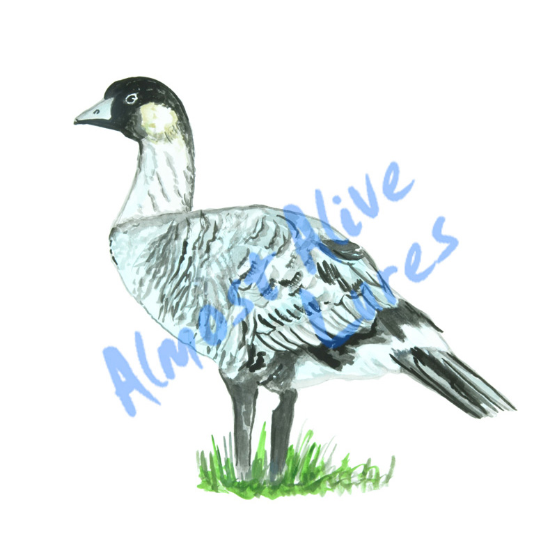 Hawaiian Nene Goose - Printed Vinyl Decal
