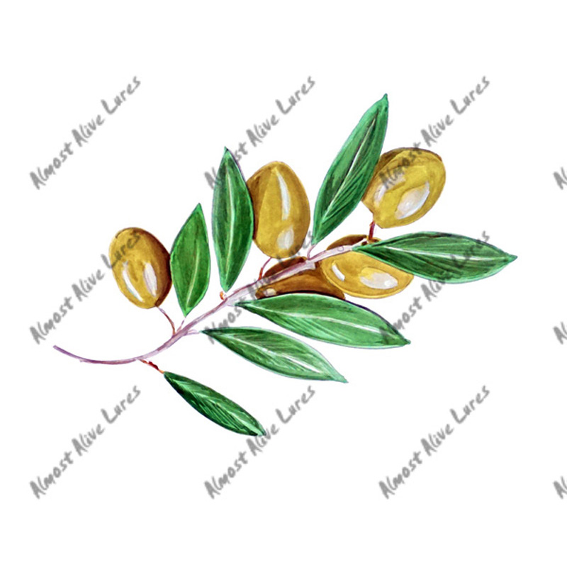 Olive Branch - Printed Vinyl Decal