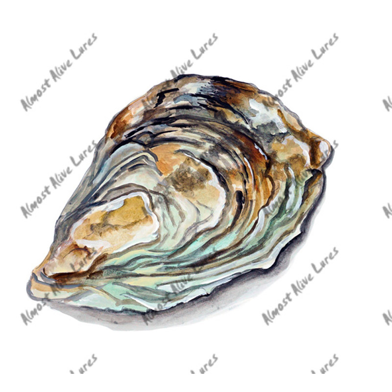 Oyster Shell - Printed Vinyl Decal