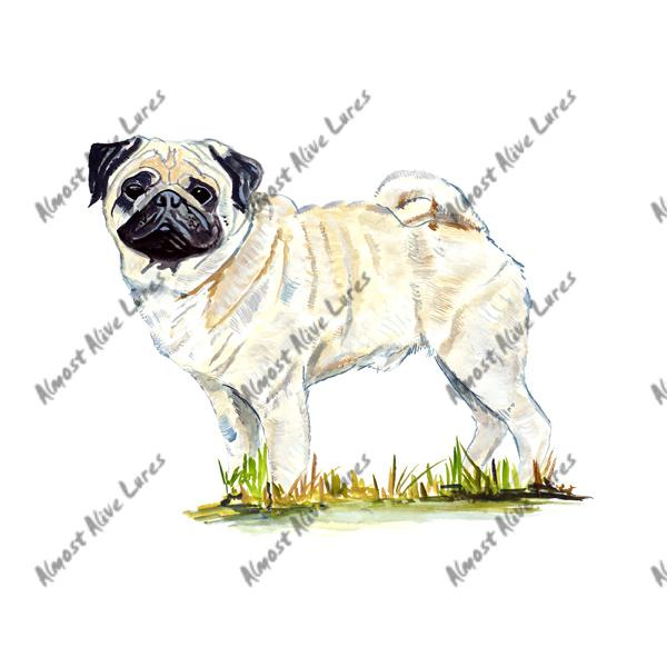 Light Cream Fawn Pug - Printed Vinyl Decal