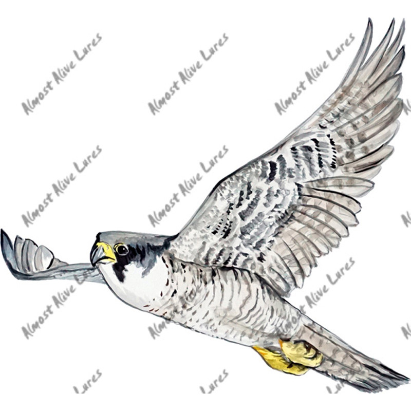 Peregrine Falcon - Printed Vinyl Decal