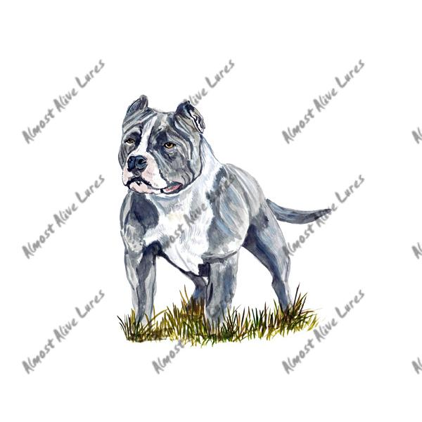 Grey White Pitbull - Printed Vinyl Decal