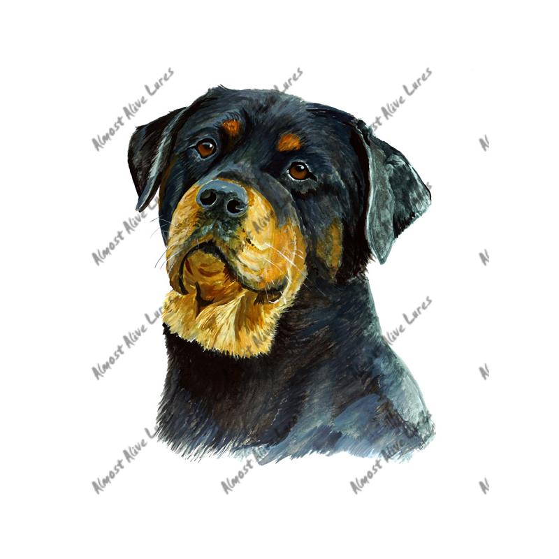 Rottweiler - Printed Vinyl Decal