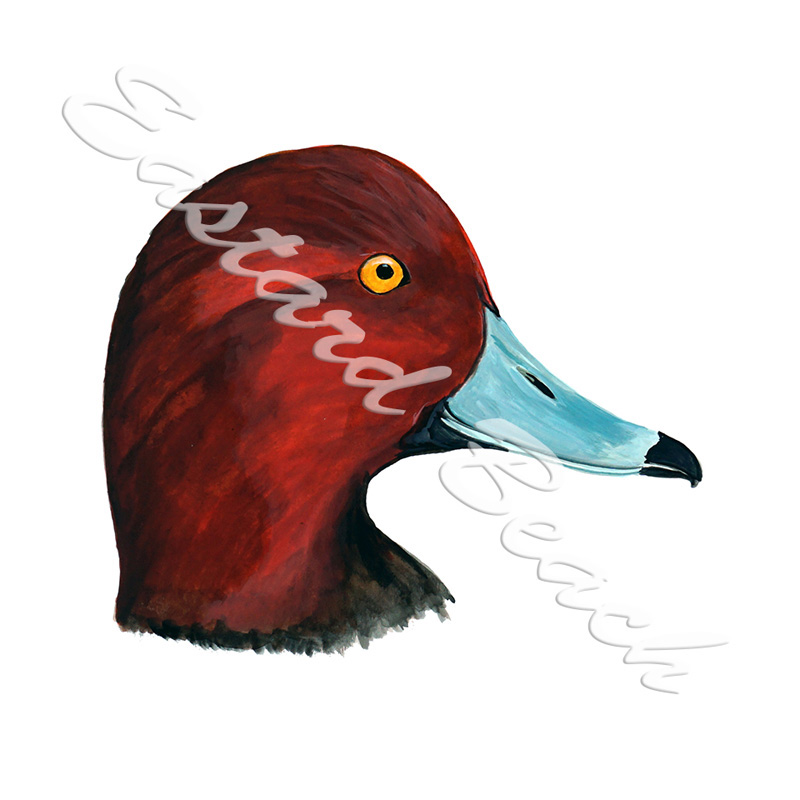 Canvasback Duck Head - Printed Vinyl Decal