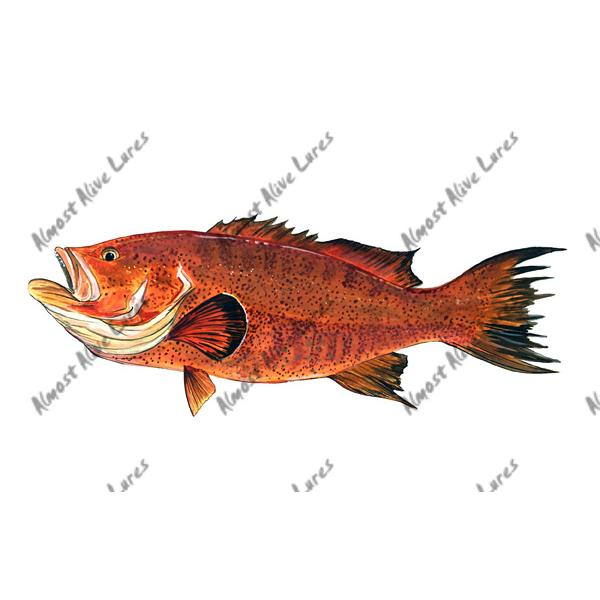 Red Grouper - Printed Vinyl Decal