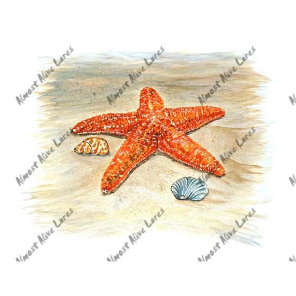 Starfish - Printed Vinyl Decal