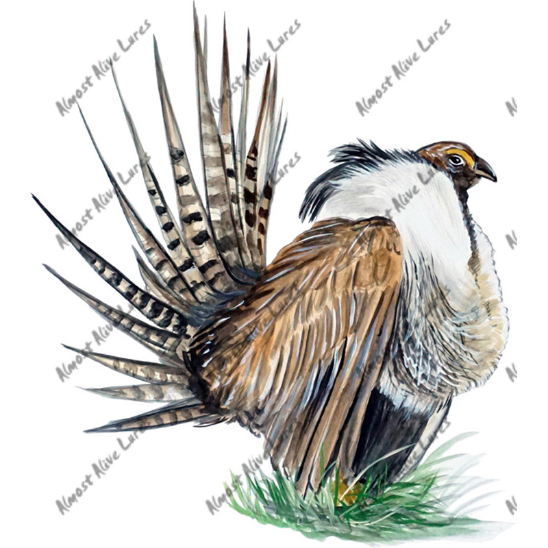 Sage Grouse - Printed Vinyl Decal
