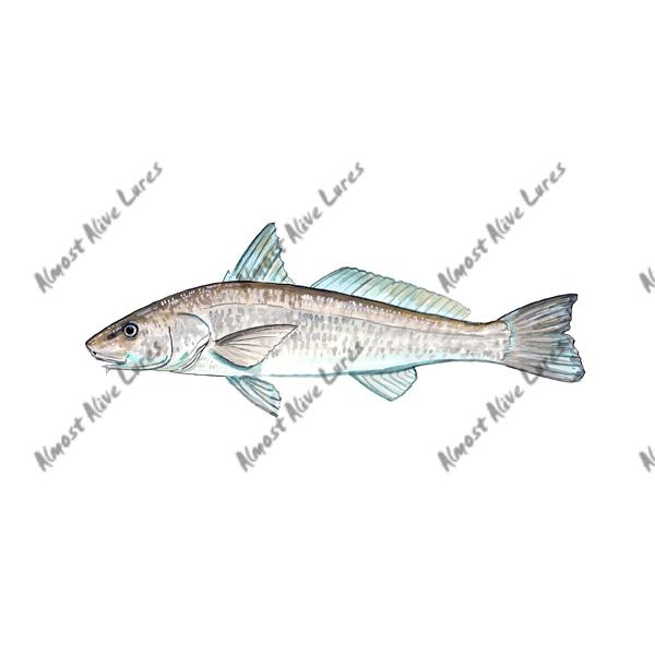 Sea Mullet - Printed Vinyl Decal