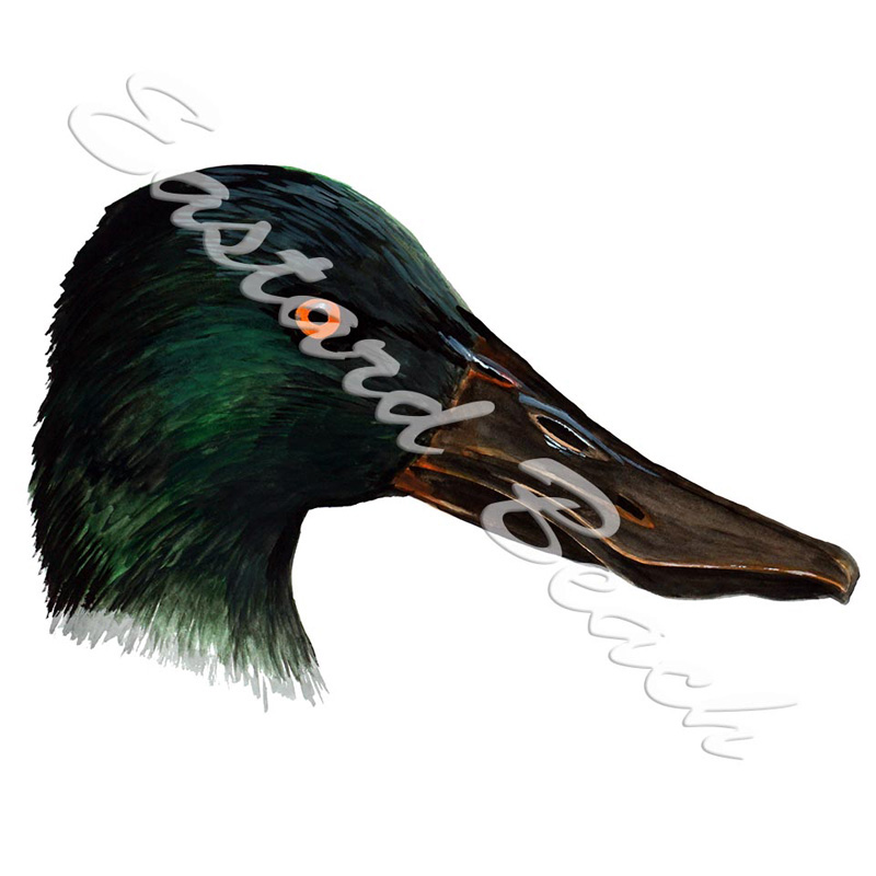 Shovelhead Duck Head - Printed Vinyl Decal