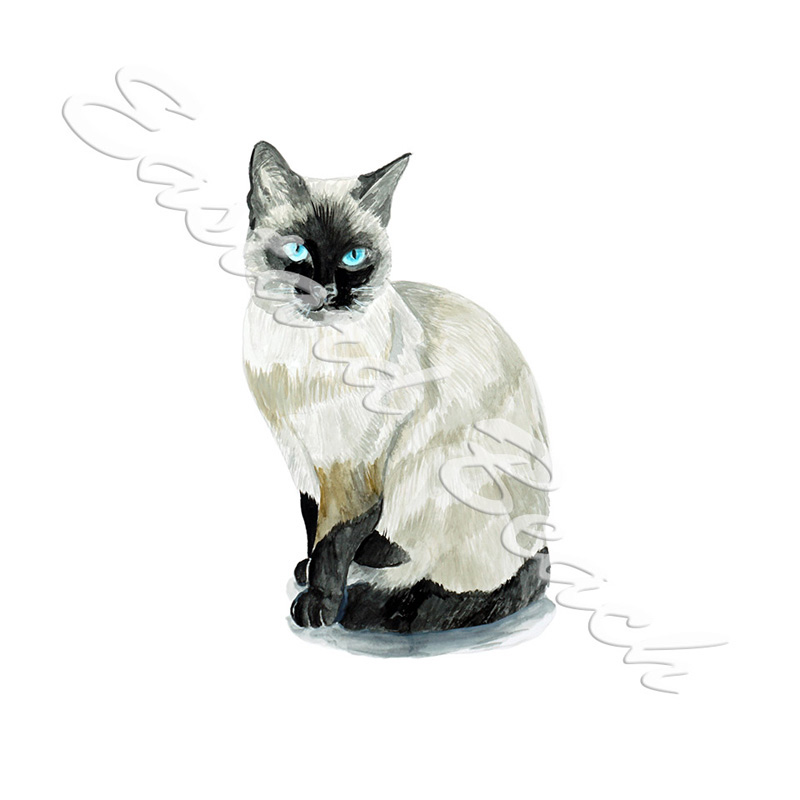Siamese Cat - Printed Vinyl Decal