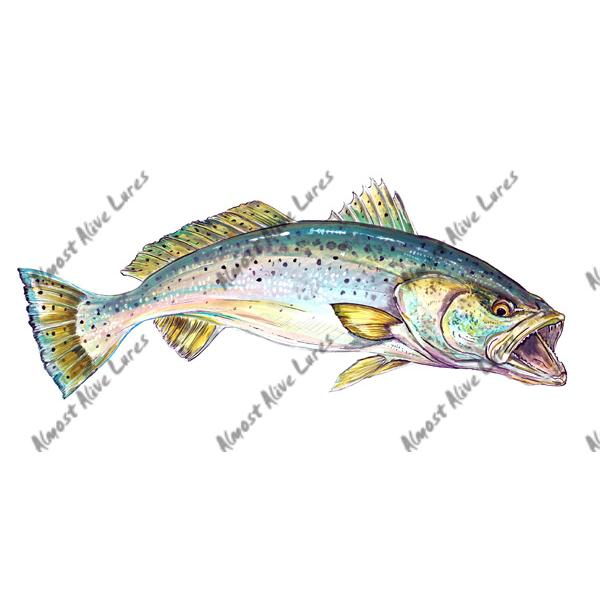 Speckled Trout - Printed Vinyl Decal