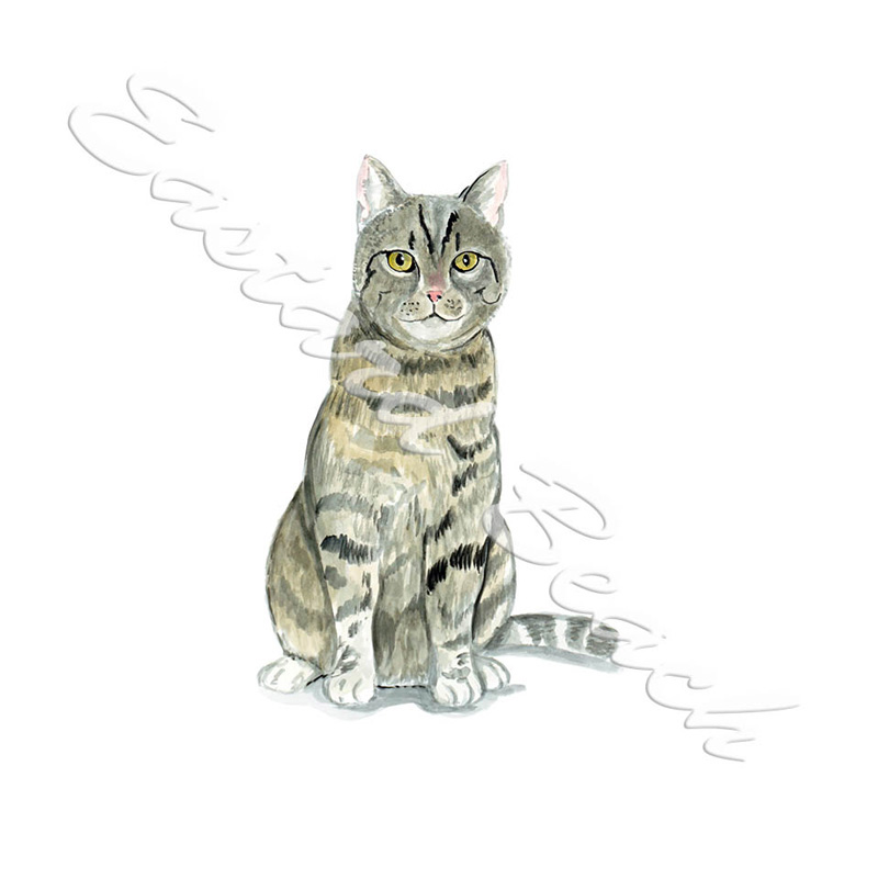 Tabby Cat - Printed Vinyl Decal