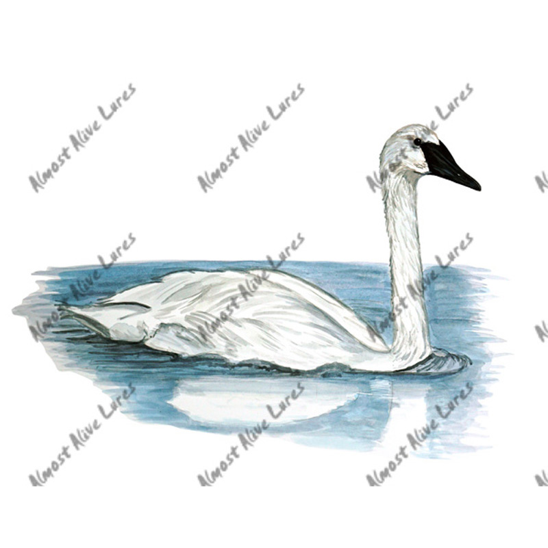 Trumpet Swan - Printed Vinyl Decal