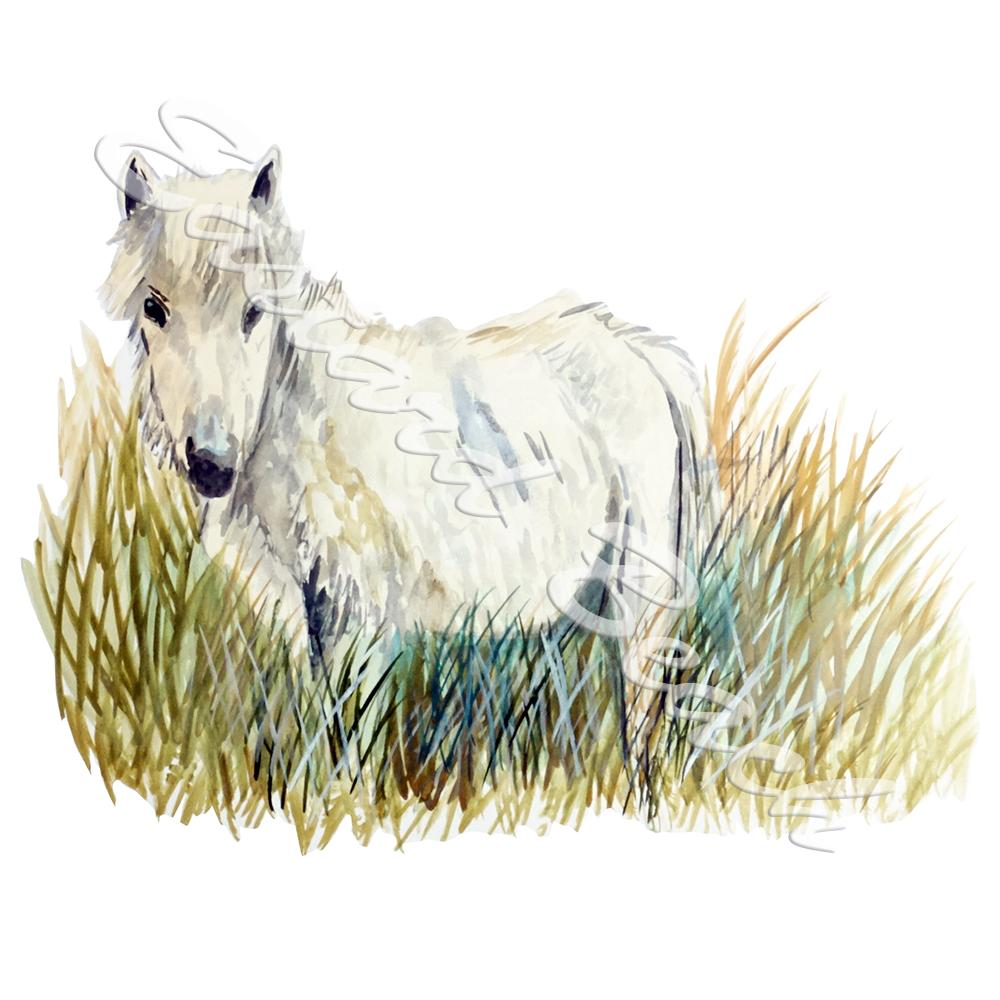 White Banks Pony