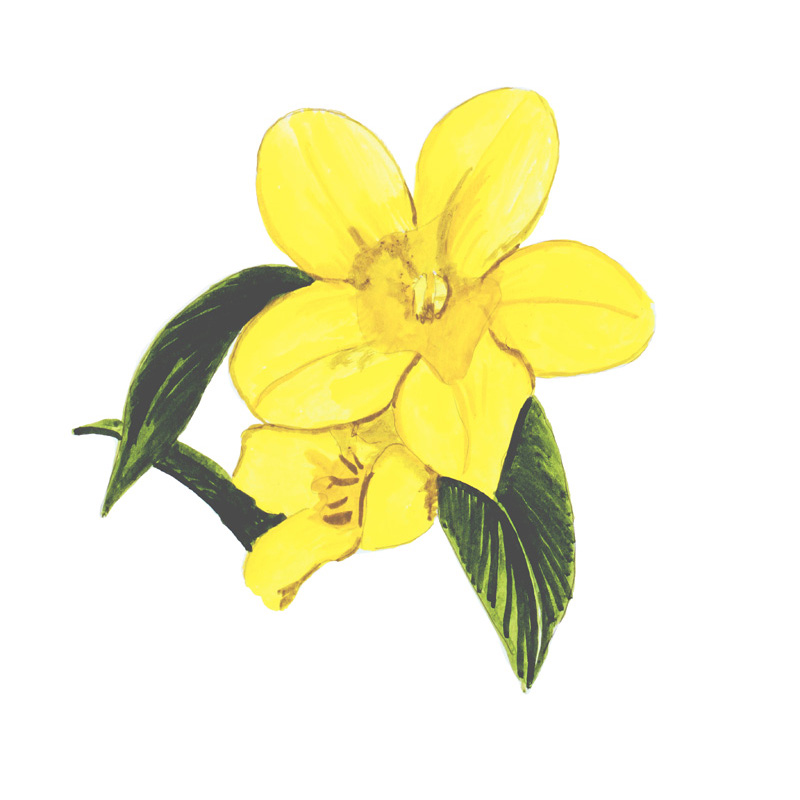 Yellow Jasmine - Printed Vinyl Decal