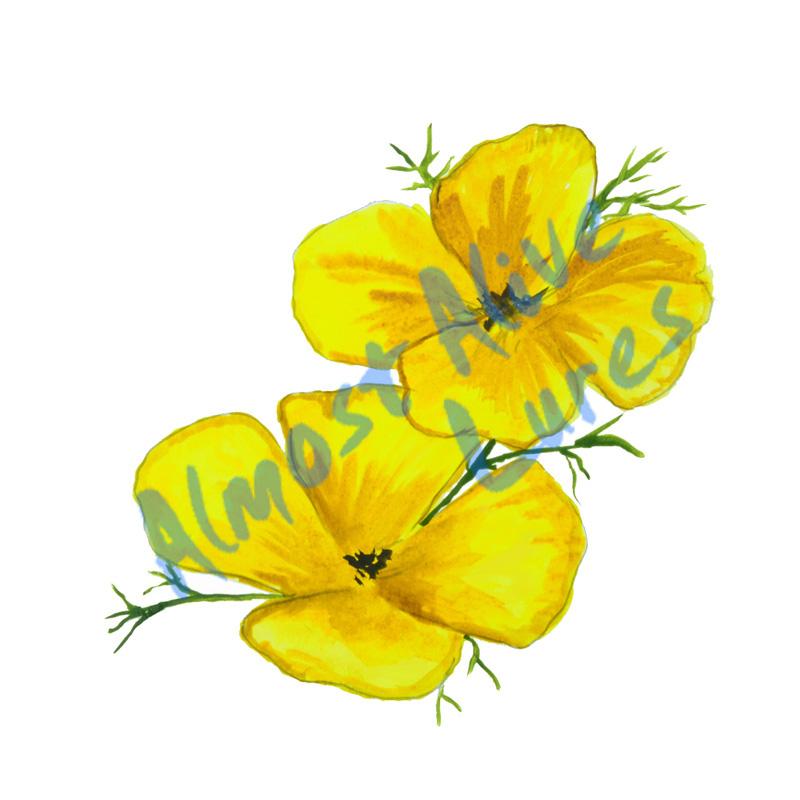Yellow Poppy - Printed Vinyl Decal