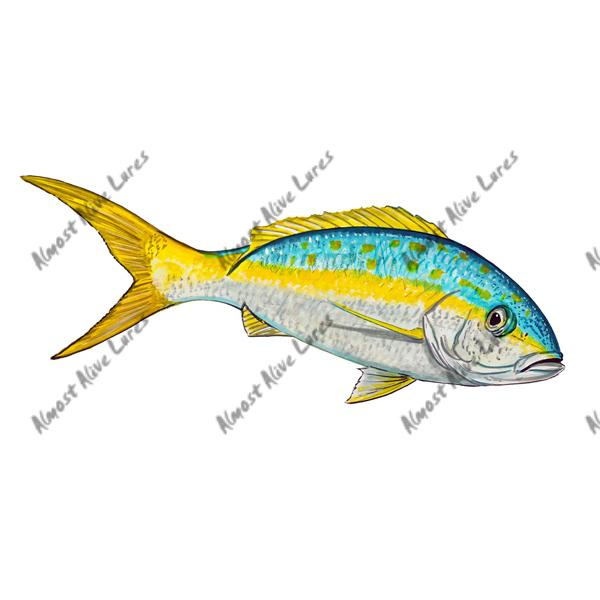 Yellowtail - Printed Vinyl Decal